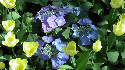 Desktop Flowers.jpg