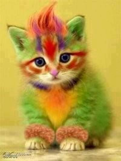 painted cat.jpg